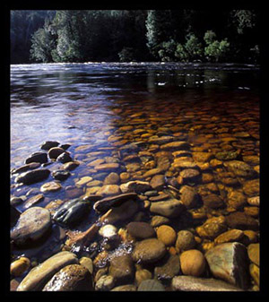 Lower Franklin River | Tasmania